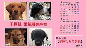 フードご支援のお願い~カレンの近況付き☆ - 子豚たちの反乱    ~保護犬達の幸せさがし~