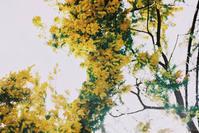 mimosa - パトローネの中