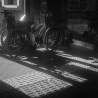 区役所の玄関口で静かに待機するヒカリトカゲ - Film&Gasoline