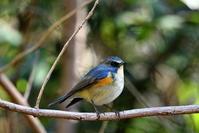 県央で - 鳥撮り日記