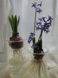 It's spring! - Our Cozy Life -Let's make it happen-