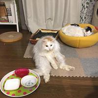 スコ! - ぶつぶつ独り言2(うちの猫ら2017)