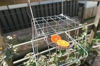 庭に野鳥を呼ぶ作戦③ - すずめtoめばるtoナマケモノ