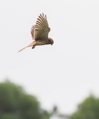 撮影あちこち・・・ - cuccooの野鳥エトセトラ