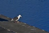 初めて撮影した鳥さんたち - じいじとばあばのフォトライフ