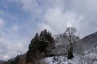 雪の千年桜 仏隆寺 - toshi の ならはまほろば
