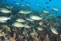 魚が沢山! - タイのタオ島から、たおみせブログ