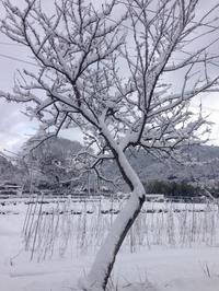 雪景色の日々 - 石のコトバ