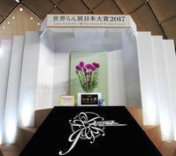 2017【世界らん展】-1 会場と日本大賞 -  ★ 野草デジカメ日記★