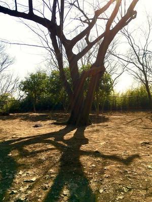 散歩の風景 - REBORN-ART-HILO