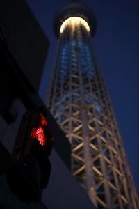 塔 黄昏の時間 - 花は桜木、