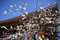 春を待ちわびて「西新井大師」 - Full of LIFE