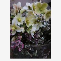どんどん開花しています - CHIROのお庭しごと
