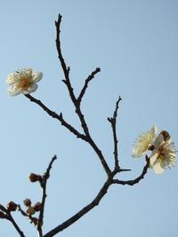 待ち遠しい春の訪れ♪ - 花と写真と