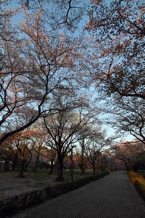 そうだ 京都、行こう。 -2017年桜 二条城(後編)- - MEMORY OF KYOTOLIFE