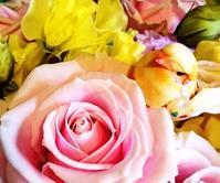お花はすっかり春です - HAPPYさんのにんまり日記