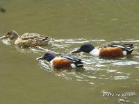 陽気の回復とともに野鳥を撮ってみました。 - デジカメ散歩悠々