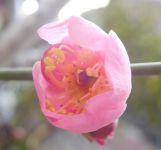 梅は咲いたか~♪ - うまこの天袋