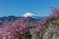河津桜と富士山 - あだっちゃんの花鳥風月