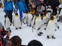 ペンギンのお散歩 - 気ままな食いしん坊日記2