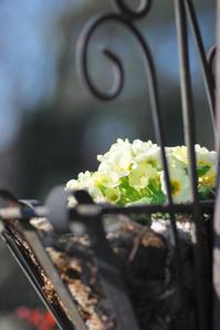 3/2 緊張 - 「あなたに似た花。」