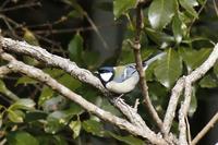 ルリの里の小鳥たち - くろせの鳥