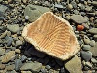 擂鉢 - 今日も渚で日が暮れて