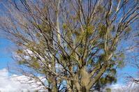 赤城颪(おろし)の吹く公園で - 季節の風を追いかけて