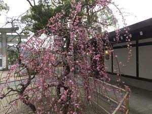 桃の節句 - 宇美八幡宮巫女日記