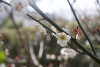 立春の候、世界の片隅で君の名を - 世話要らずの庭