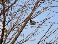 山下公園の野鳥 - つれづれ日記