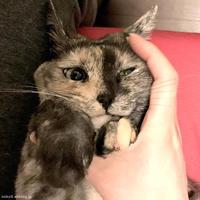 キューティー - 賃貸ネコ暮らし|賃貸住宅でネコを室内飼いする工夫