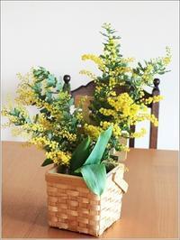 春一番🎶 ミモザのお花 - Iris Lyu