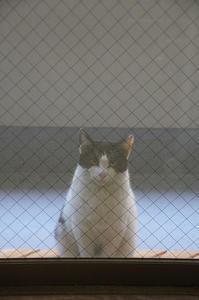 最近の猫事情8 - 鳥会えず猫生活