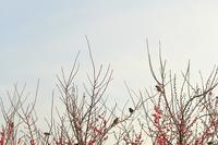 雀と梅花 - 「美は観る者の眼の中にある」
