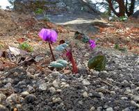 早春の花と、素人の杞憂も - 星の小父さまフォトつづり