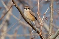 ヤマシギ捜索 - 野鳥写真日記 自分用アーカイブズ