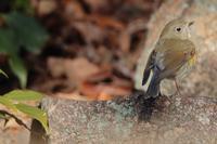 山の植物園でフクロウ! - 野鳥写真日記 自分用アーカイブズ