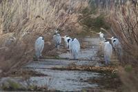 アオサギの寄り合い - 野鳥写真日記 自分用アーカイブズ