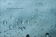 JAZZ and RAIN - ハーブガーデン便り