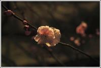 小石川後楽園 -12 - Camellia-shige Gallery 2
