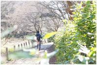 春一番 - my Photo blog