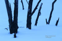 蒼い雪 - 一瞬をみつめて