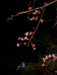 熊本城~♪。 - 青い海と空を追いかけて。