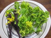 野菜の収穫 - 花の自由旋律