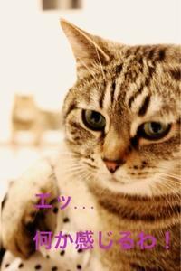 にゃんこ劇場「熱視線!」 - ゆきなそう  猫とガーデニングの日記