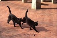 今日の黒猫さん - 4にゃん日記+