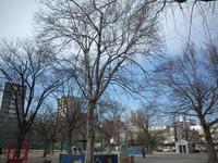 樹 170218 - LOOSE