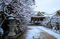 北野天満宮の雪景色 - 花景色-K.W.C. PhotoBlog