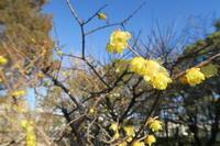 優しい黄色 - すずめtoめばるtoナマケモノ
